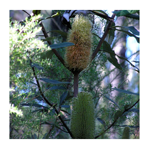STEP SubmissionsGovernment Banksia