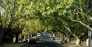 Tree Bonds can help Preserve the Urban Forest