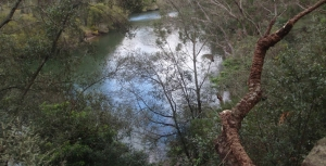 Lane Cove National Park to Gain some Land near M2