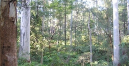 Climate Change Implications for Local Bushland