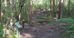 New Walk Series – Introduction to our Local Bushland