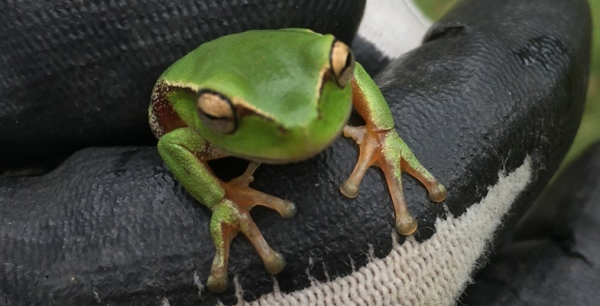 Tree Frog Apartments Available – Free!