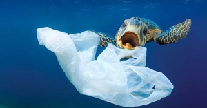 Senate Committee Recommends a Ban on Plastic Bags – Can this Happen?