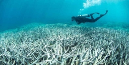 Great Barrier Reef in Peril but Adani Mine Approved