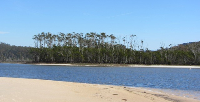 Bushwalking Proposal for the Shoalhaven