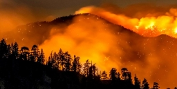 How Western USA Forests Respond to Fire