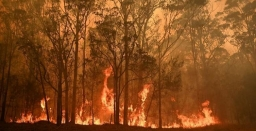Impact of Bushfires on Biodiversity